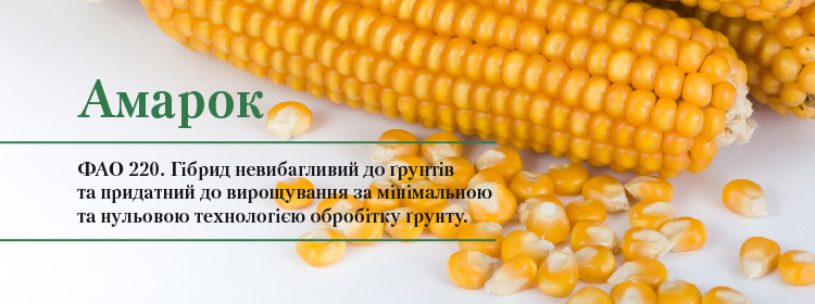http://vnis.com.ua/catalog/seeds-of-cereals/corn/amarok/