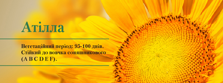 http://vnis.com.ua/catalog/oil-seed/sunflower/attila/